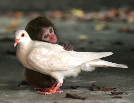 animal love2